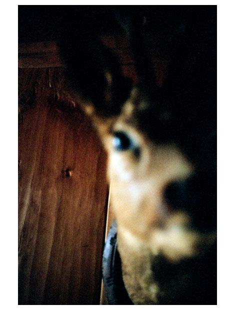 klt-crying_night-59